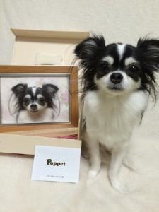 M-Poppet_s