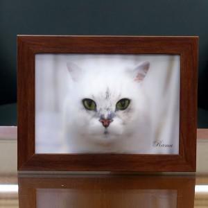 ramu_cat_4